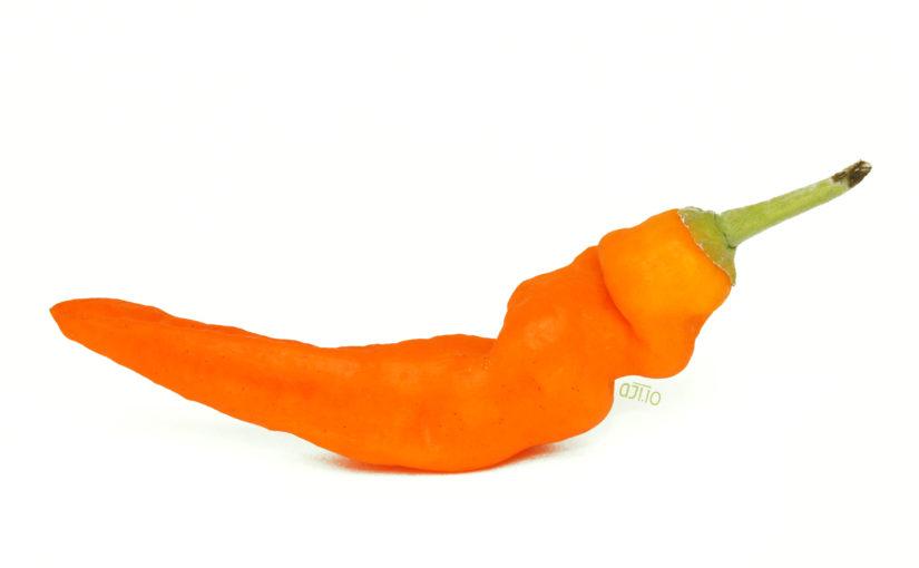 Aji Amarillo Pepper