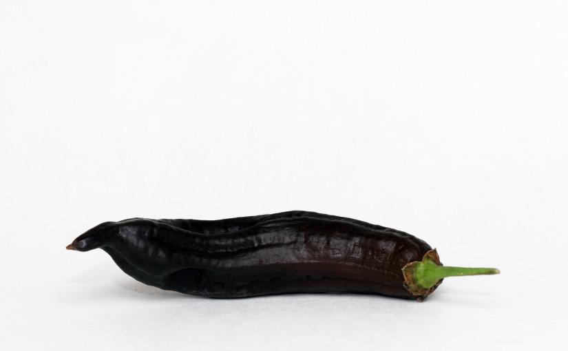 Pasilla de Oaxaca Pepper