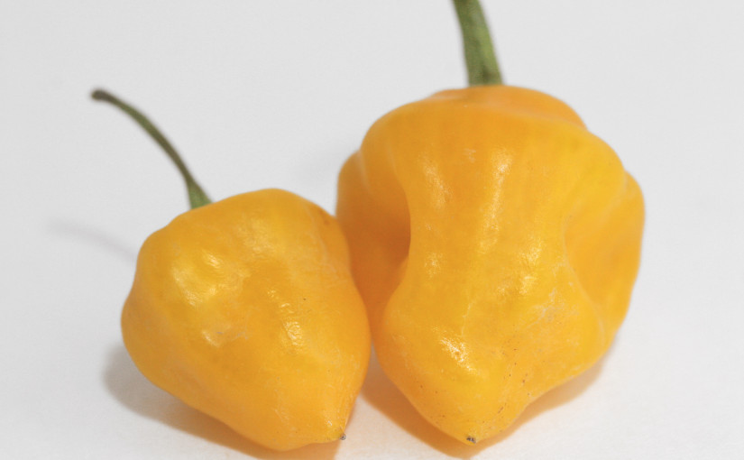 Trinidad Perfume Pepper