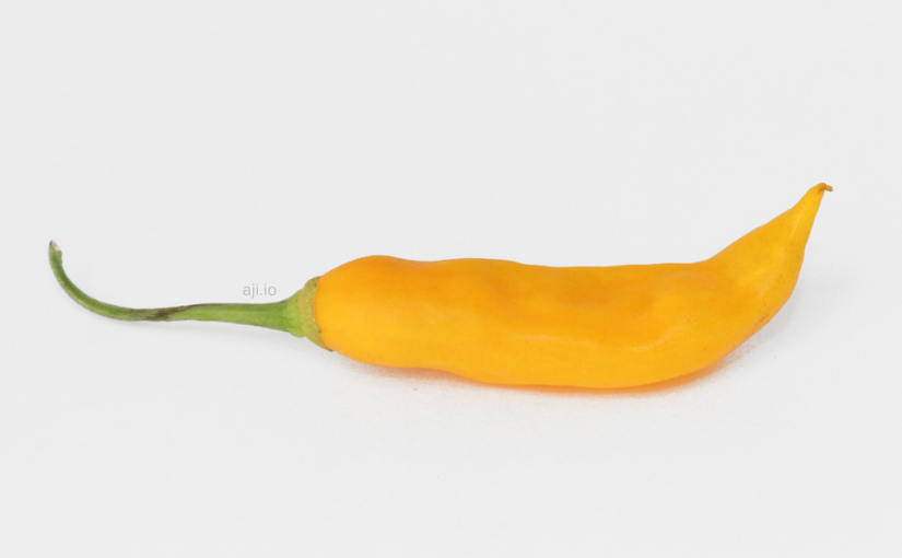 Aji Golden Pepper