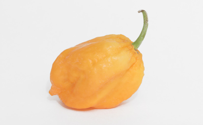 Bhut Orange Copenhagen Pepper