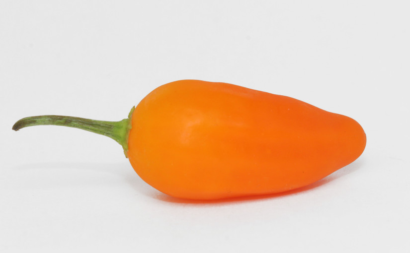 Jamy Pepper