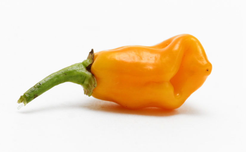 Datil Pepper