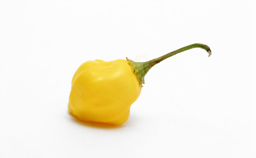 Yellow Aji Fantasy Pepper